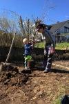 Första maj planterade plommonträdet
